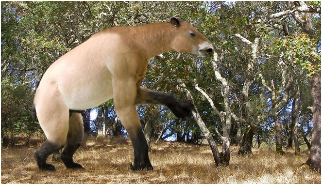 Chalicotheres [Image Source]