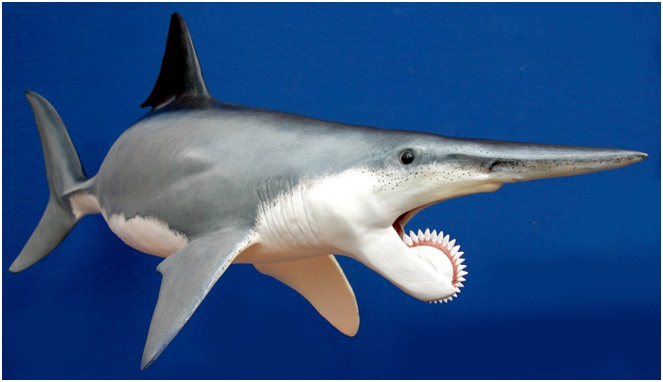 Helicoprion [Image Source]